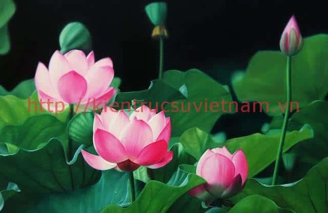 tranh hoa sen 5 1 - Những bức tranh vẽ hoa sen đẹp nhất