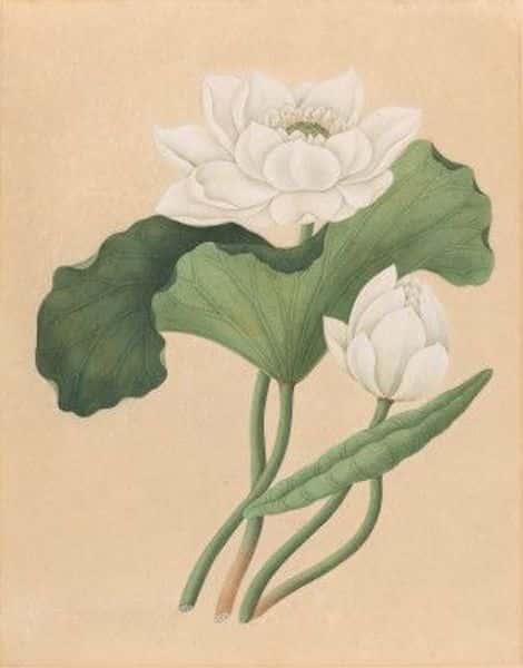 tranh ve hoa sen dep - Những bức tranh vẽ hoa sen đẹp nhất