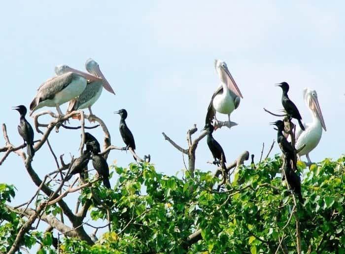 9 du lich vuon co - Khu du lịch sinh thái đảo cò Chi Lăng Nam, Thanh Miện, Hải Dương