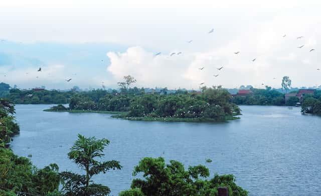 dao co chi lang nam - Khu du lịch sinh thái đảo cò Chi Lăng Nam, Thanh Miện, Hải Dương