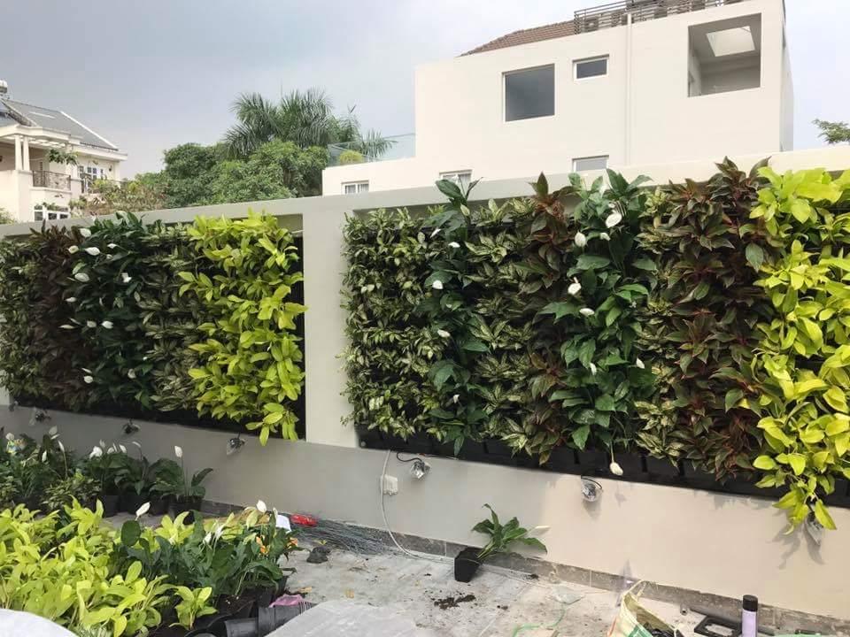 thiết kế tường cây xanh - Thiết kế tường cây xanh