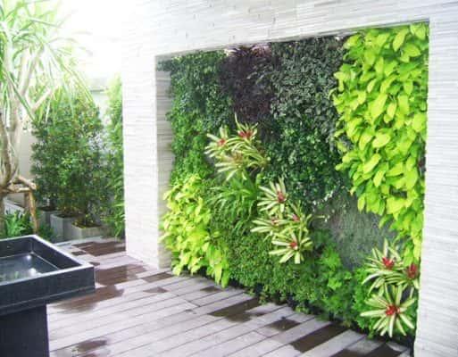 vuon dung 513x400 - Thiết kế tường cây xanh