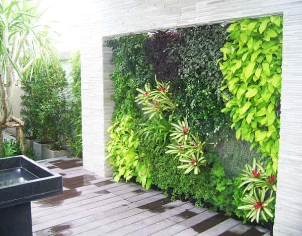 vuon dung - Thiết kế tường cây xanh