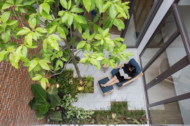 cay nen trong o gieng troi photo 1 1558256291321387691855 - Những loại cây nên trồng ở giếng trời giúp không khí trong lành và tốn ít công chăm sóc