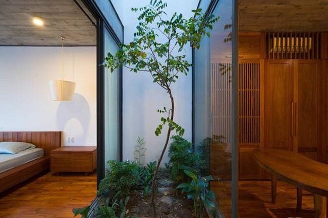 cay nen trong o gieng troi photo 1 15582562946641300209177 - Những loại cây nên trồng ở giếng trời giúp không khí trong lành và tốn ít công chăm sóc
