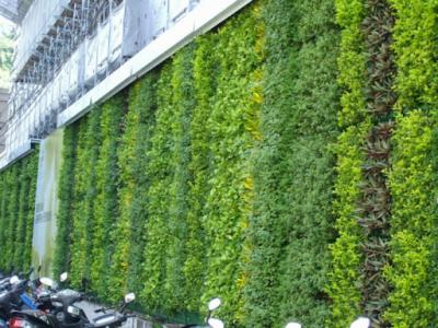 vuong tuong dung 1 400x300 - Những lưu ý quan trọng trước khi thiết kế vườn tường đứng